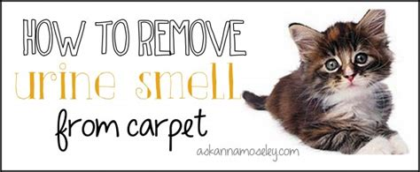 how to remove pee smell from bed how to remove urine smell from carpet ask anna