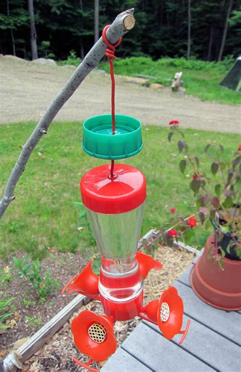 how to ant proof your hummingbird feeder apartment therapy