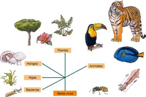 imagenes de animales transgenicos google images