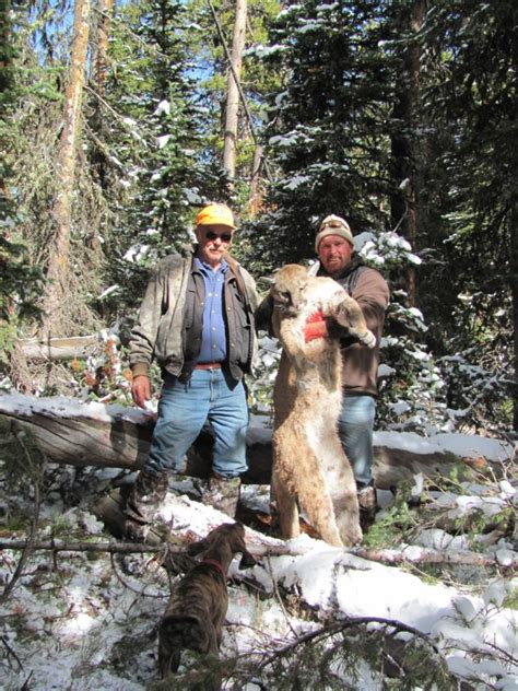 wyoming mountain lion hunting guide outfitter booking agent