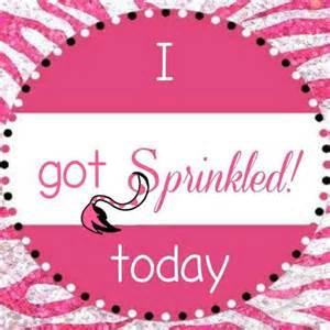 pink zebra home best 25 pink zebra home ideas on pink zebra