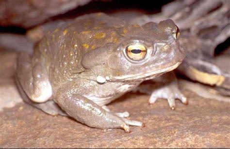 tropical desert animals and plants yecora region