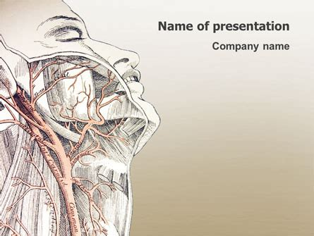 anatomy ppt templates free craniofacial anatomy powerpoint template backgrounds