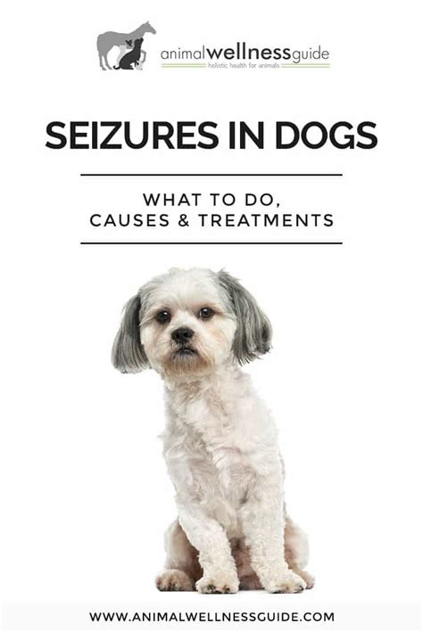 types of seizures in dogs seizures in dogs what to do causes and treatment