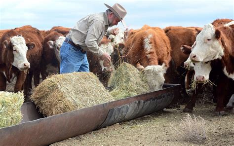 Rancher House by Usda To Open Sites To Help Farmers Ranchers Cope With