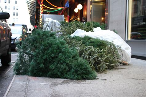 guide to christmas tree disposal in nyc streeteasy