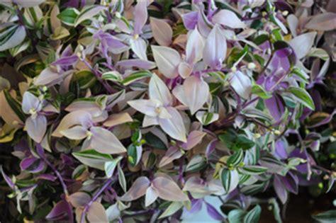 Plantes Appartement Sombre by Ombre Peu D Entretien Plantes D Int 233 Rieur Increvables