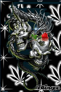 dragon vs skull picture 24135860 blingee com