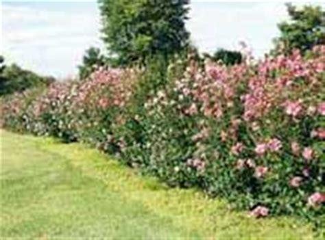 jardines setos imágenes seto para la valla