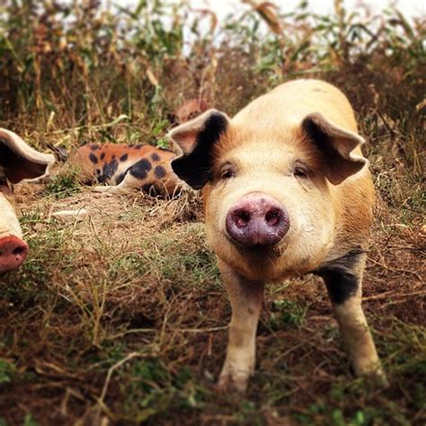 The Brook Farm Murders the importance of our evolution beyond killing for food