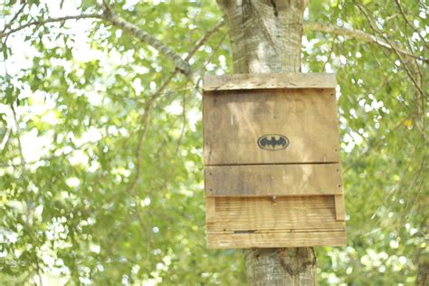 free bat house plans free bat house plans do it yourself plans diy free download speaker cabinets plans