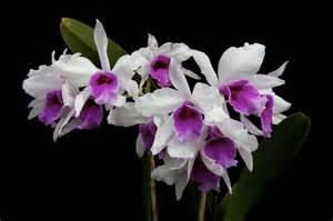Xem nhung hinh anh hoa phong lan tim dep nhat the gioi 5 jpg hinh anh