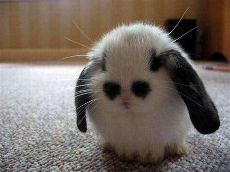 photo shoots of cutest animals