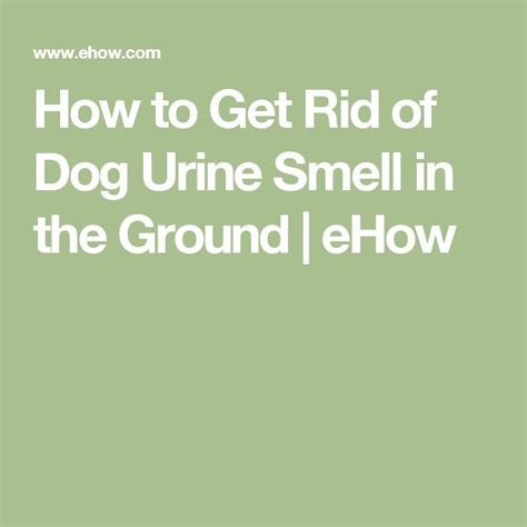 how to get rid of pee smell in bathroom how to get rid of dog urine smell in the ground dogs