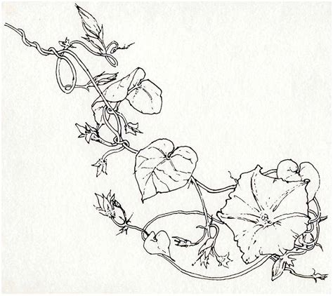 Drawing Vines by Janice Skivington October 2010