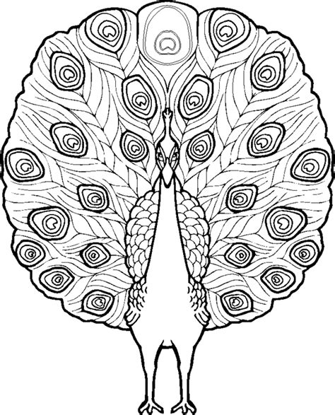 coloring pages of peacock feathers free coloring pages of peacok feathers