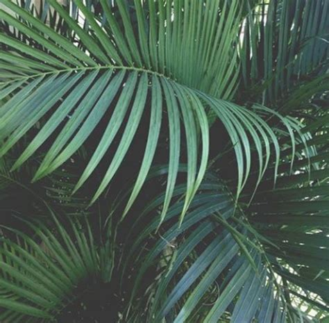 Aesthetic Plant Wallpaper | plants image 3604410 by winterkiss on favim com