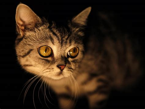wallpaper cat night wallpapers yellow eyes cat wallpapers
