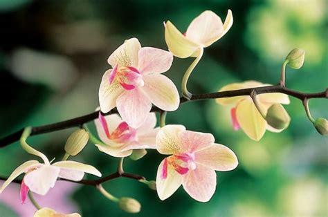 fiori bellissimi da regalare fiori per la festa della mamma