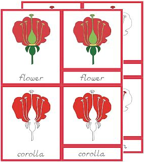 template for montessori nomenclature cards early childhood botany nomenclature cards the helpful