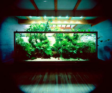 Aquarium Aquascape Designs by Nature Aquariums And Aquascaping Inspiration