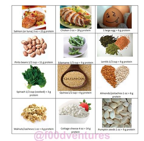 protein rich foods handy dandy reference for protein rich foods