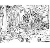 Malvorlagen Fur Kinder  Ausmalbilder Wald Kostenlos