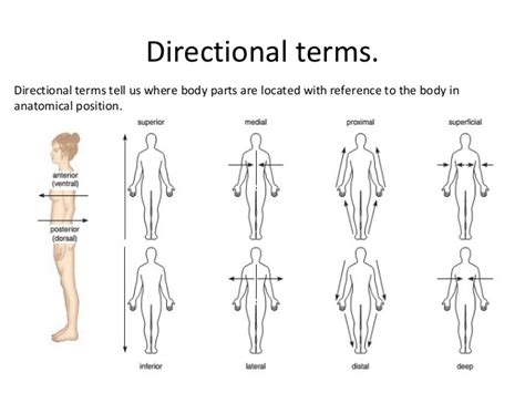 body orientation direction planes and sections body directions regions planes