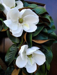 mississippi state flower  magnolia magnolia