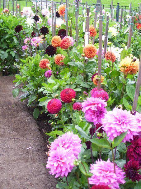 Dahlia Flower Garden 1000 Images About Dahlia Gardens On Gardens Botanical Gardens And Flower