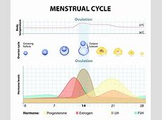 Training & Recovery During Your Menstrual Cycle ... Female Period Cycle