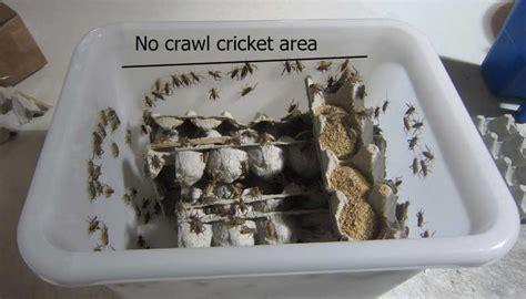 mega keeper cricket   ideal  housing keeping