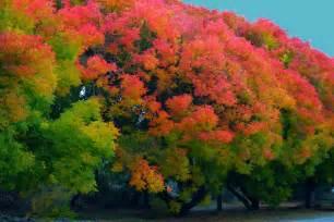 fall colors california panoramio photo of fall colors menlo park ca