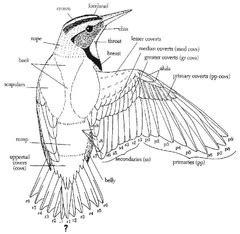 ornithology quiz  flashcards quizlet