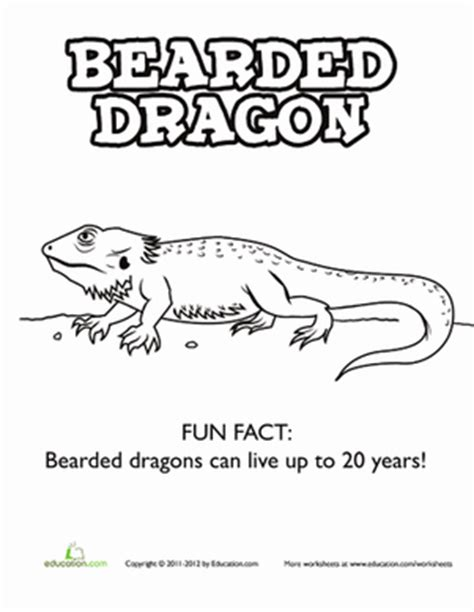 coloring page bearded dragon bearded dragon worksheet education com
