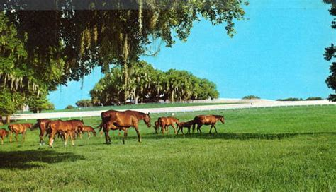Ocala Records Florida Memory Horses Graze In Pastures Ocala Florida