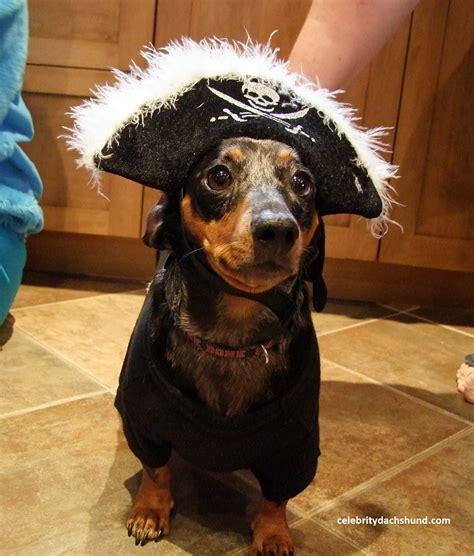 costume for dachshund superdog photo contest dachshund costumes hallowiener