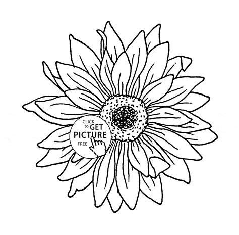 sunflower coloring pages sunflower free colouring pages
