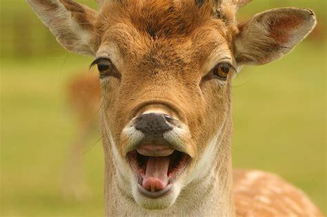 Deer Meme - 10 best deer memes sweeney feeders