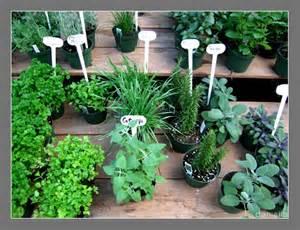 herb garden plants storytelling the skill laboratory