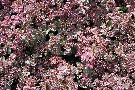 pflanzplan staudenbeet mit gräsern paket bl 252 tentraum ganzj 228 hrig bl 252 hendes staudenbeet
