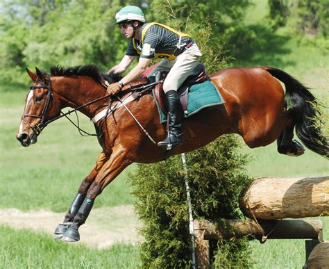 racing breeds 3 most commonly used breed in equestrian sports sportreseller