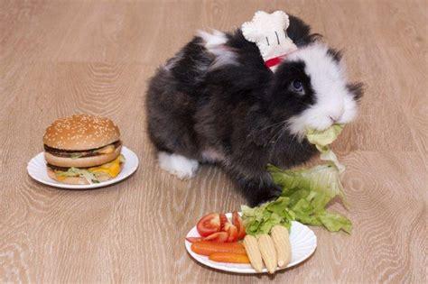 vegetables bunnies can eat adorable bunnies with food bunnyopia