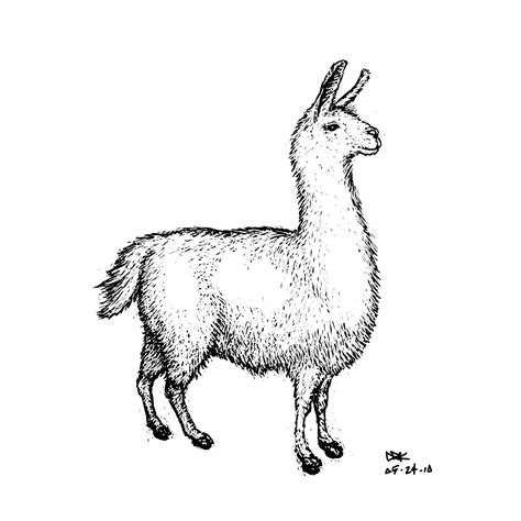 drawn llama pencil   color drawn llama