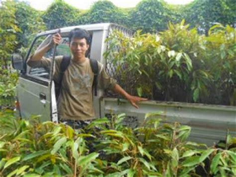 Bibit Durian Bawor Di Jogja bibit durian bawor jogja bibit durian nasa