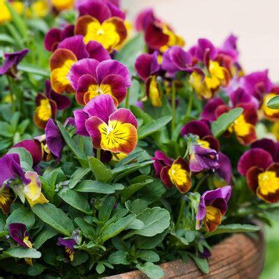 best flower best winter flowers for color sunset