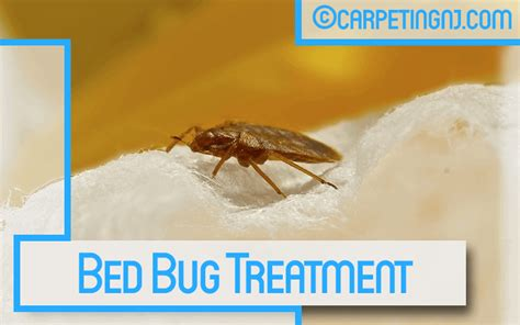 bed bug clean up carpeting nj 20 off all cleaning services new jersey