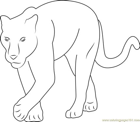 baby panther coloring page free panther coloring pages