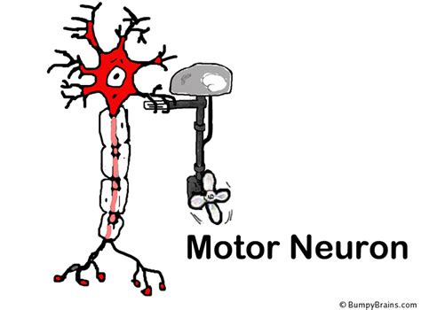 motor neurom neuron comic www pixshark images galleries with a