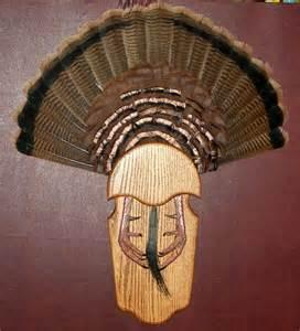 Turkey Fan Mount Template by Turkey Taxidermy Mounts Cake Ideas And Designs